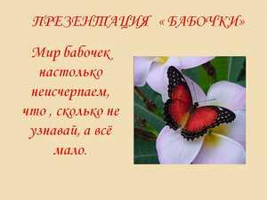 презентация о бабочках