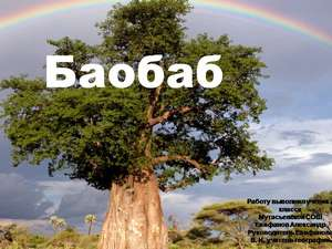 об африканском баобабе презентация