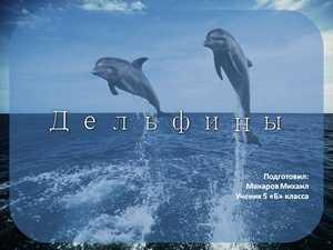 дельфины презентация