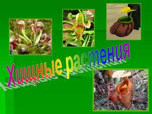хищные растения презентация