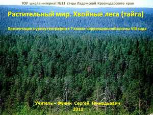 хвойные лес презентация