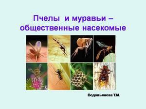 об общественных насекомых презентация