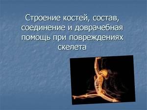 о скелете презентация