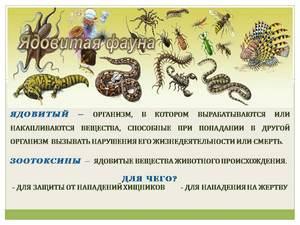 о ядовитых животных презентация