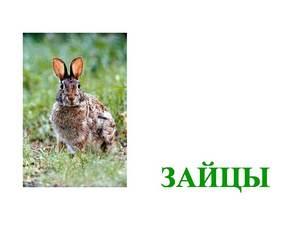о зайцах презентация